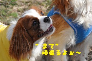 20090307_川原_18
