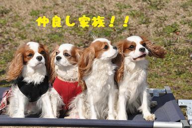 20090307_川原_24_01