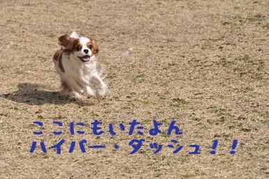 20090307_川原_05