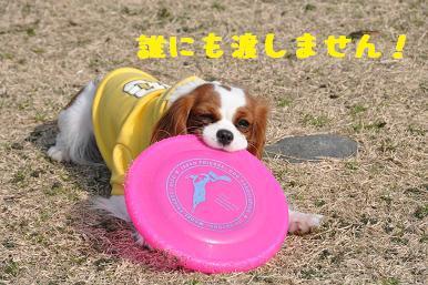 20090307_川原_28