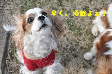 20090307_川原_22