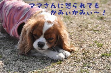 20090307_川原_08