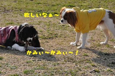 20090307_川原_10