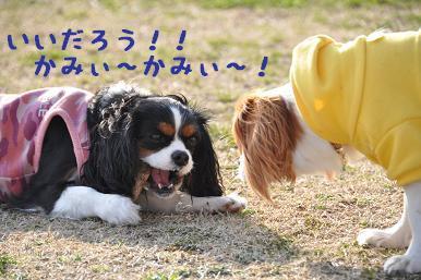 20090307_川原_11