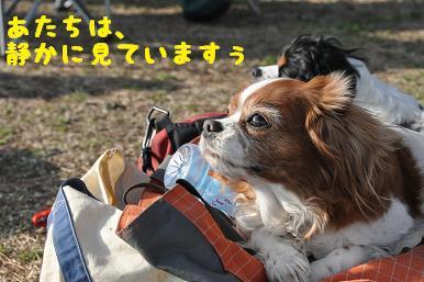 20090307_川原_16