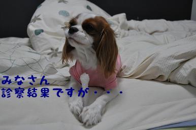 20090314_日常_01