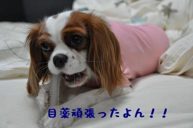 20090314_日常_02