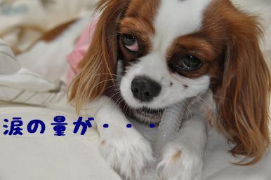 20090314_日常_03