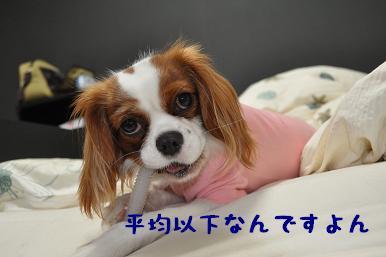 20090314_日常_05