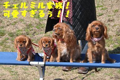 20090315_川原_01