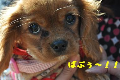 20090315_川原_02