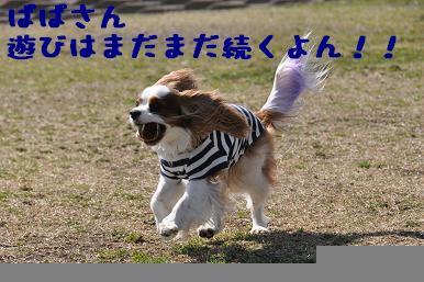 20090315_川原_08