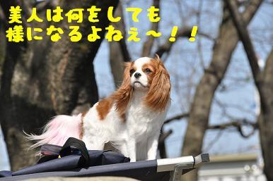 20090315_川原_10