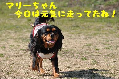 20090315_川原_11