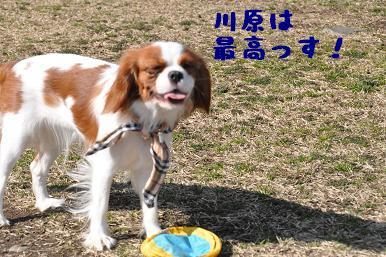 20090315_川原_14