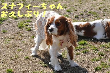 20090315_川原_16