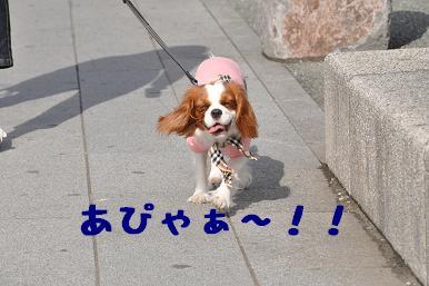 20090320_江ノ島_02