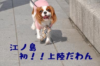 20090320_江ノ島_01