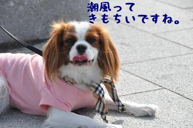 20090320_江ノ島_03