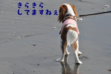 20090320_江ノ島_05