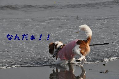 20090320_江ノ島_06