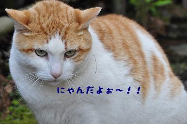 20090320_江ノ島_11