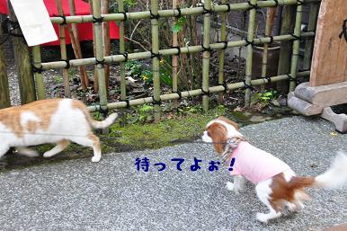 20090320_江ノ島_12
