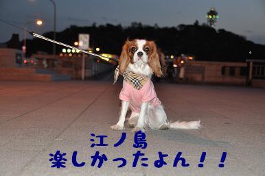 20090320_江ノ島_19