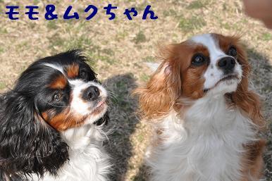 20090321_川原_07