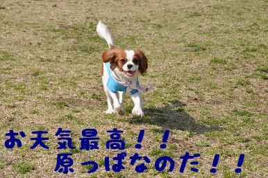 20090321_川原_01