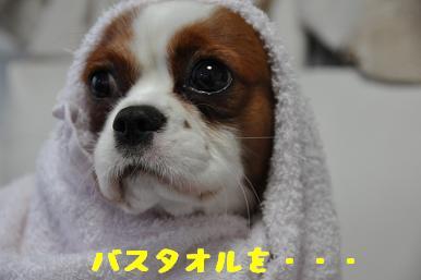 タオル巻き巻き_02