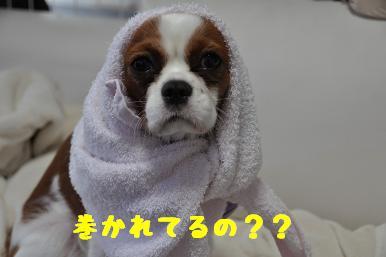 タオル巻き巻き_03