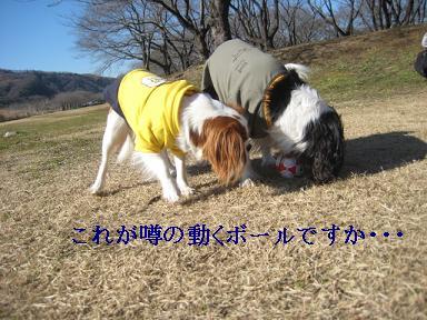 20090125_川原_08