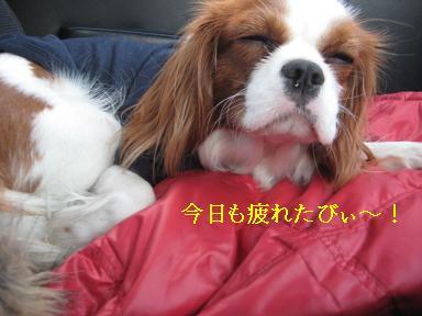 20090125_川原_28