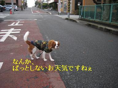 ラムがドライアイ_06