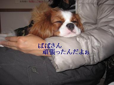 ラムがドライアイ_09