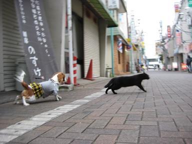 いつものお散歩10