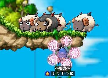 38 SDTに羊