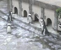 823-penguin.jpg