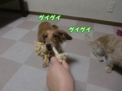 おもちゃはニコのん!