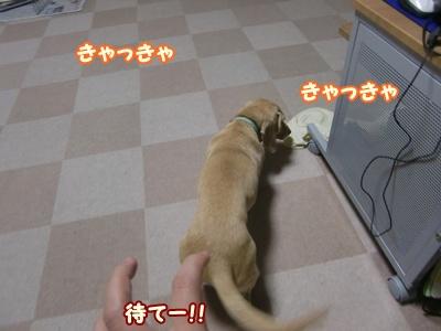 逃げな!!