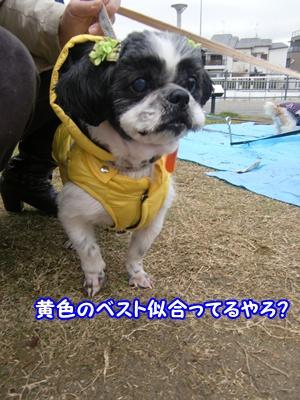 2011_1210_110615-CIMG6539.jpg