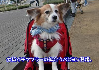 2011_1210_141451-CIMG6643.jpg