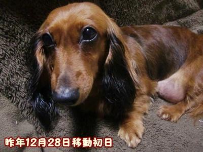 2011_1228_223642-CIMG7056.jpg