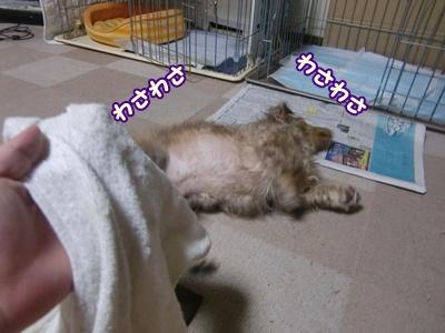 お風呂に入りました。
