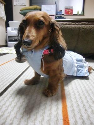 美犬愛ちゃん。