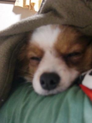 寝てる~。