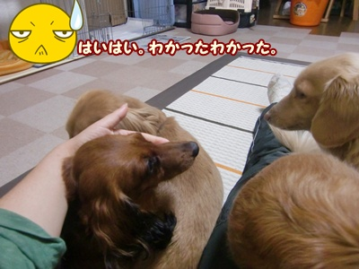2012_0105_080523-CIMG7580.jpg