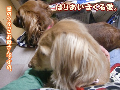 2012_0105_190535-CIMG7598.jpg