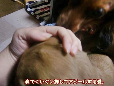 2012_0105_190742-CIMG7606.jpg